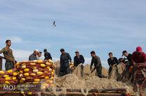ماهیان یال اسبی در صدر لیست صادرات آبزیان از هرمزگان