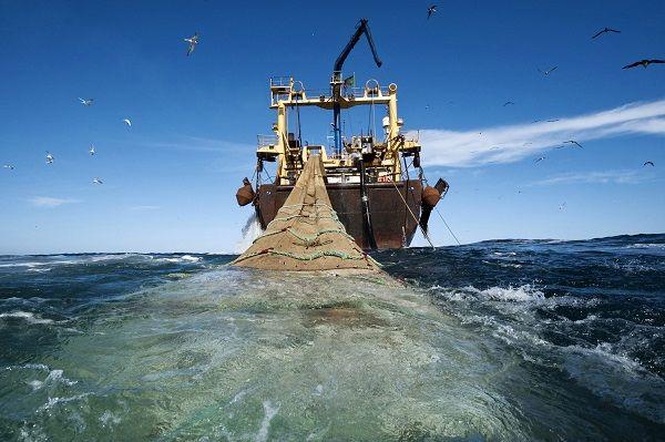 1300 شناور غیر مجاز در خلیج فارس وجود دارد