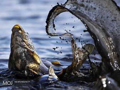 گزیده ای از برترین عکسهای طبیعت و حیات وحش