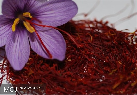 حذف عربستان از لیست مشتریان / صادرات زعفران ایرانی کاهش یافت