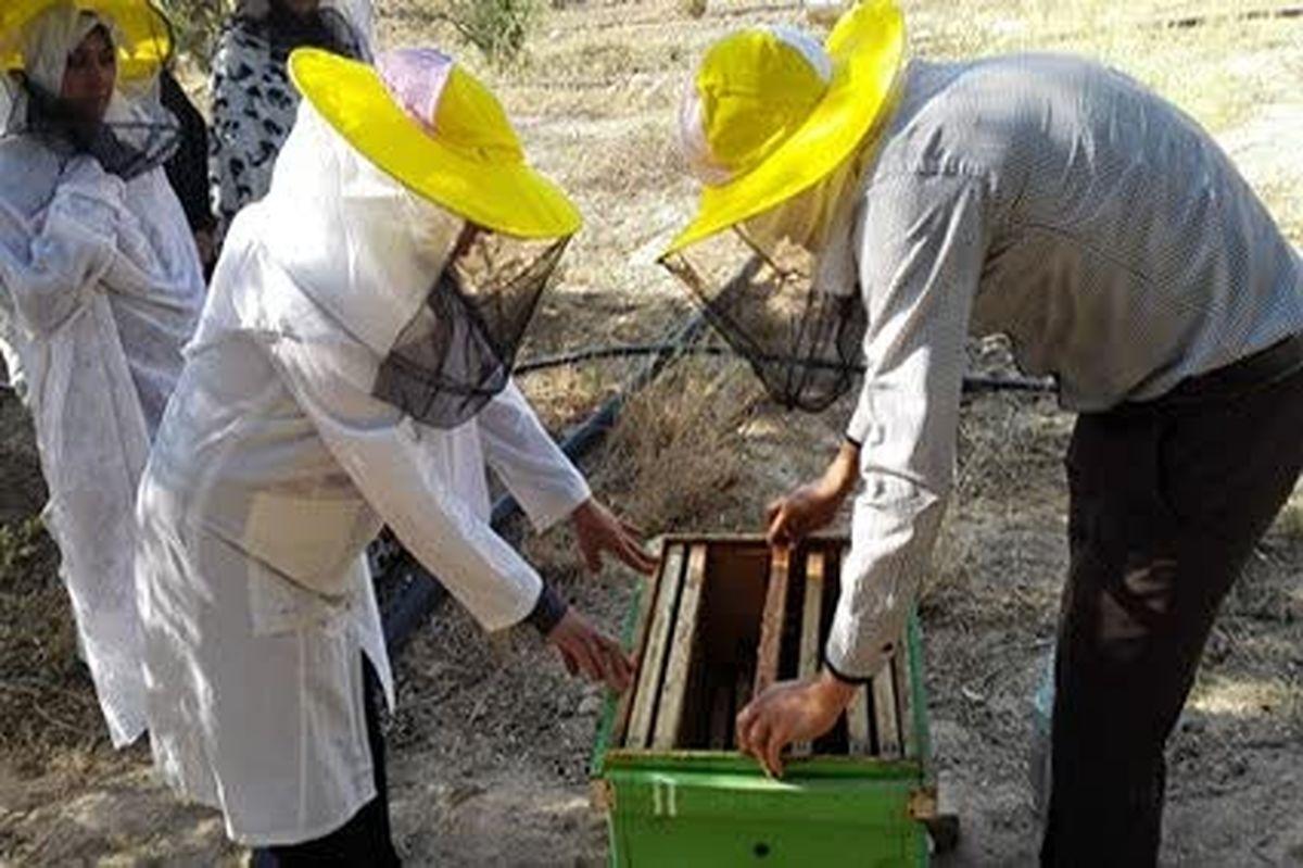بهره مندی 305 نفر از روستائیان قم از آموزشهای مهارتی