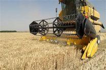 پیش بینی رشد ۷۸ درصدی خرید گندم مازاد بر نیاز کشاورزان کرمانشاهی