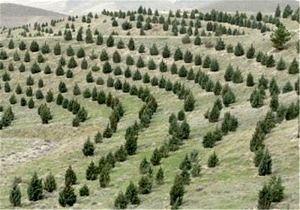 امسال 10 میلیارد تومان برای احیای دشتهای کرمانشاه پیشبینیشده است