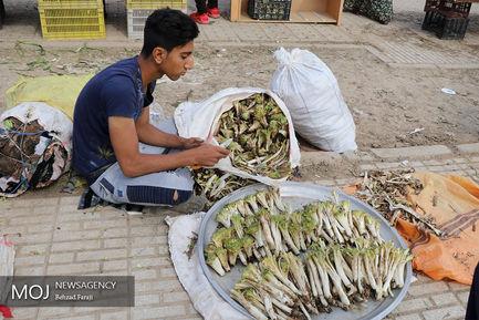 بازار گیاهان کوهی در کرمانشاه