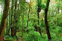 بحران غیرقابل کنترلی در جنگلهای شمال کشور نداریم / مناطق آسیب دیده از آفت «شب پره» شمشادکاری می شود