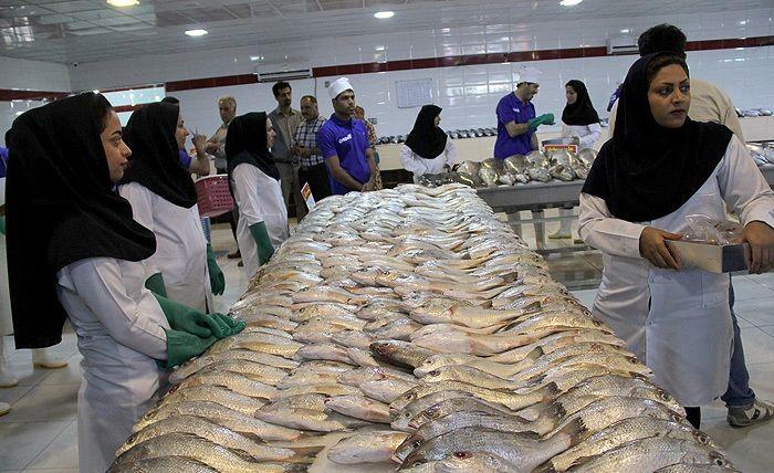 توزیع ماهی با تخفیف حداقل 30درصد