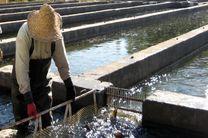 راهاندازی 11 مزرعه پرورش ماهی خاویار در هرمزگان