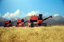 ایجاد یک بازار منسجم در کشاورزى ایران با اصلاح روش ها پایش محصولات