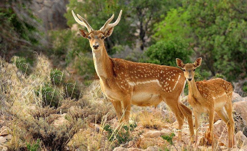 شناسایی 353 گونه جانوری در استان اردبیل