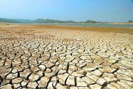 وسعت مزارع گندم سیستان و بلوچستان کاهش یافته است