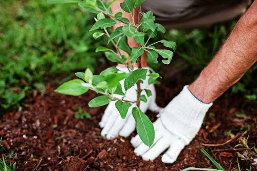 آغاز عملیات کاشت و واکاری نهال در فضای سبز شهری
