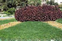 گیاهان پوششی کم مصرف جایگزین چمن در شهر قم میشود