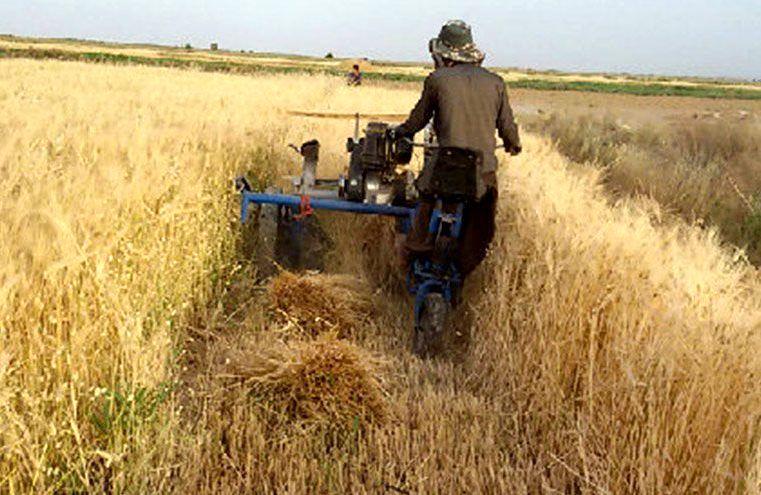پیش بینی برداشت بیش از 2 تن جو از زمین های کشاورزی در خوروبیابانک