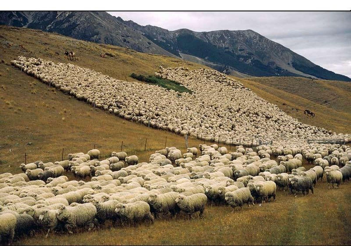 پایان فصل چرای دام در مراتع ییلاقی در اردستان