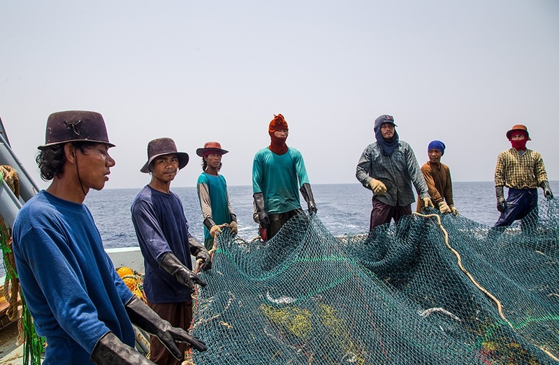 توقیف 27 کشتی متخلف پیش از ورود سپاه موضوع کشتیها/وظیفه شیلات قیمت گذاری ماهی نیست