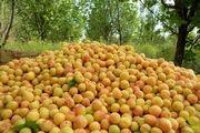 پیش بینی برداشت ۷۵۰ تن زردآلو در شهرستان خلخال