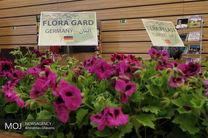 صادرات گل و گیاه زینتی از نوشهر