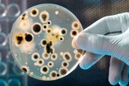 تأثیر میکروبها در بروز بیماریهای قلبی و عروقی
