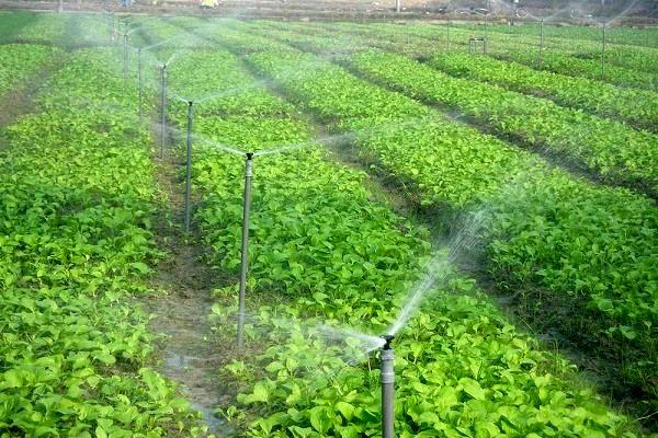 تصویب 5 طرح کشاورزی با اعتبار 3830 میلیون ریال در کارگروه اشتغال سرپل ذهاب