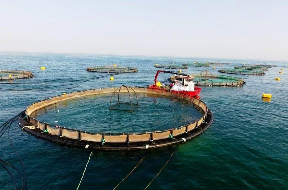 هرمزگان رتبه نخست پرورش ماهی را در کشور دارد