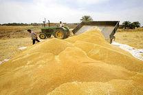 پیش بینی خرید ۱۰ میلیون تن گندم از کشاورزان کشور