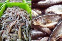 پیشبینی تولید 21 هزار تن آبزیان در کرمانشاه/سرانه مصرف ماهی در کرمانشاه 9 کیلوگرم است