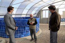 تاکید فرماندار بافق بر آبزی پروری و فراوری ماهی تیلاپیا در بافق