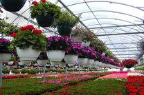 سه هزار هکتار به وسعت گلخانه های کشور اضافه شد
