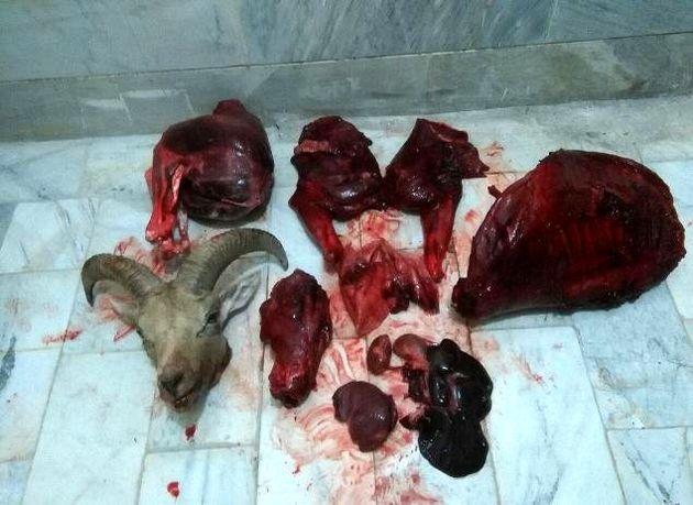 کشف لاشه قوچ وحشی از شکارچیان در شاهرود