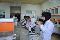 دانشجویان ایرانی موتورهای تحقیق دانشگاههای آمریکا هستند/ بلاتکلیفی پذیرفتهشدگان ایرانی دانشگاههای آمریکا