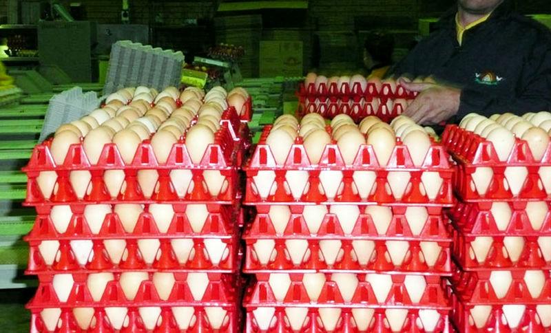 مصرف سالانه تخممرغ در کرمانشاه 21 هزار تن است/فقط 11 هزار تن در کرمانشاه تولید میشود