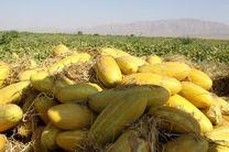 هندوانه و لیمو ترش ارزان میشود / خربزه کیلویی ۳ هزار تومان