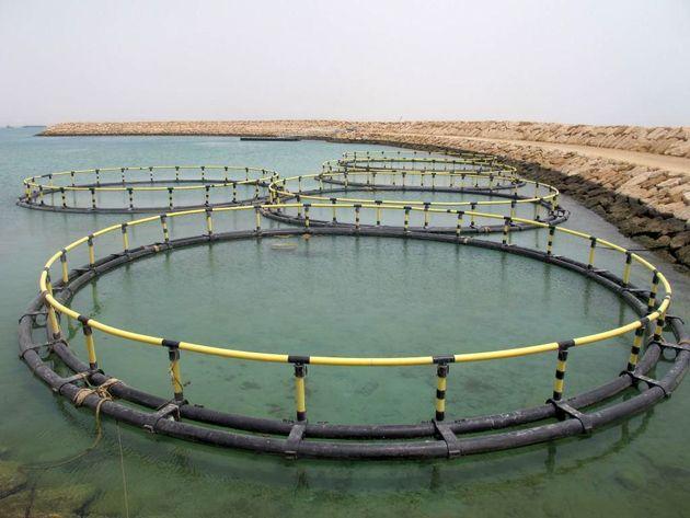 تولید ۲۰۰ هزارتن ماهی در قفس ۸هزار میلیارد تسهیلات میخواهد