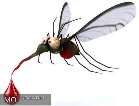 ۱۳ هندی در سنگاپور به ویروس زیکا مبتلا شدند