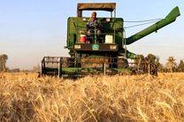 پیش بینی برداشت بیش از 10 هزار تن گندم از مزارع شهرستان مبارکه
