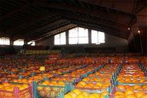 خرید٦٠ تن زعفران از کشاورزان/از ٢٠ اسفند عرضه میوه های ذخیره شده در بازار آغاز می شود