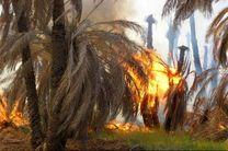 سوختن حدود 700 نخل از مزارع خنافره /آتش سوزی خنافره خسارت جانی نداشت