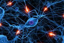 مرکز سخاوت مغز شناسایی شد