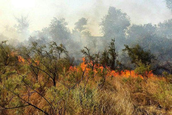 آتشسوزی در جنگلهای حاشیه رود ارس