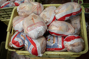 توزیع مرغ منجمد در البرز