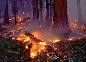 آتش سوزی جنگل های مازندران همچنان ادامه دارد