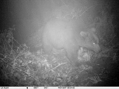 ثبت تصاویر خرس قهوه ای در شفت