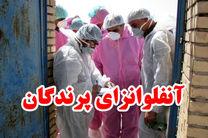 آلودگی سه مرغداری  به آنفلوآنزای فوق حاد پرندگان در نجف آباد