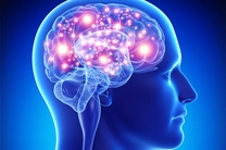۱۰۰ ناحیه جدید در مغز کشف شد