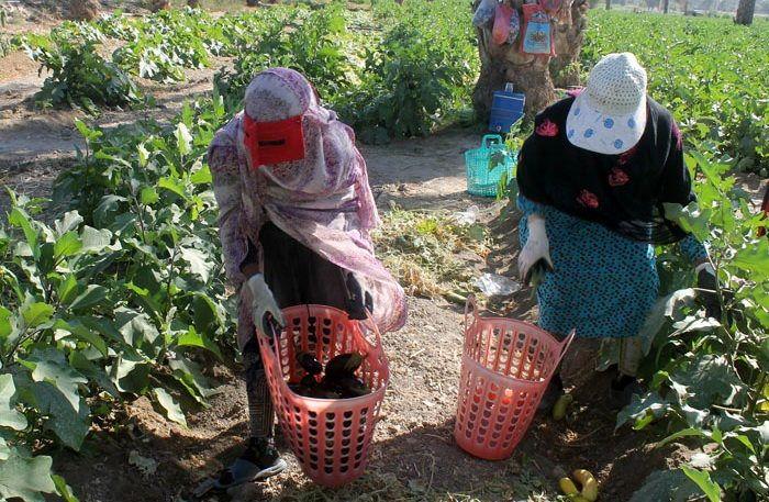 ۴۰۶ پروانه فعالیت کشاورزی در شهرستان رودان  صادر شد
