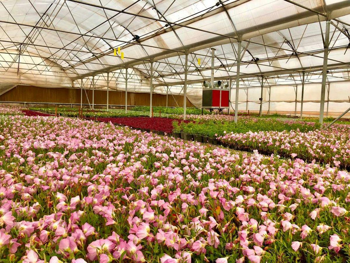 آغاز فاز جدید طرح مطالعاتی بررسی سازگاری گونههای گیاهی برای فضای سبز قم