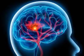 تأسیس 50 انجمن دانشجویی مغز و شناخت در کشور