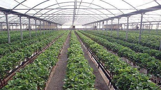 ضرورت توسعه الگوهای نوین و کشت گلخانهای در هرمزگان