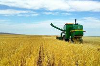 افزایش 20 درصدی سطح زیر کشت محصول جو در استان اردبیل