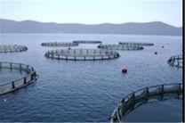 ایران و کره شرکت مشترک پرورش ماهی تاسیس میکنند